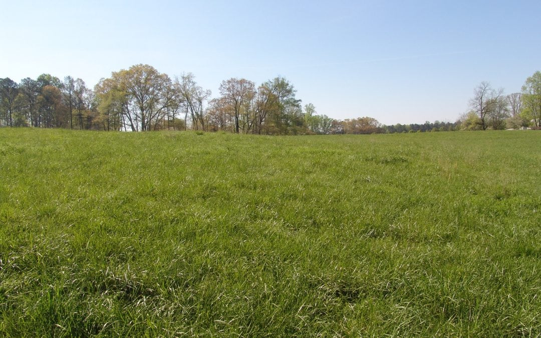 How Much Does Natural Burial Cost?